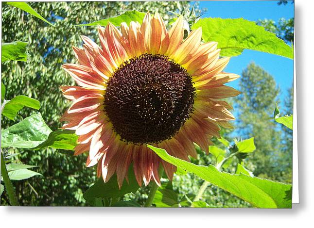 Sunflower 107 Greeting Card by Ken Day