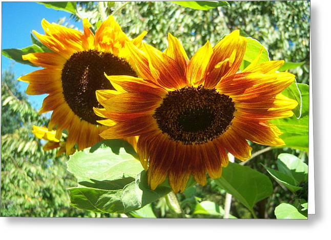 Sunflower 115 Greeting Card by Ken Day