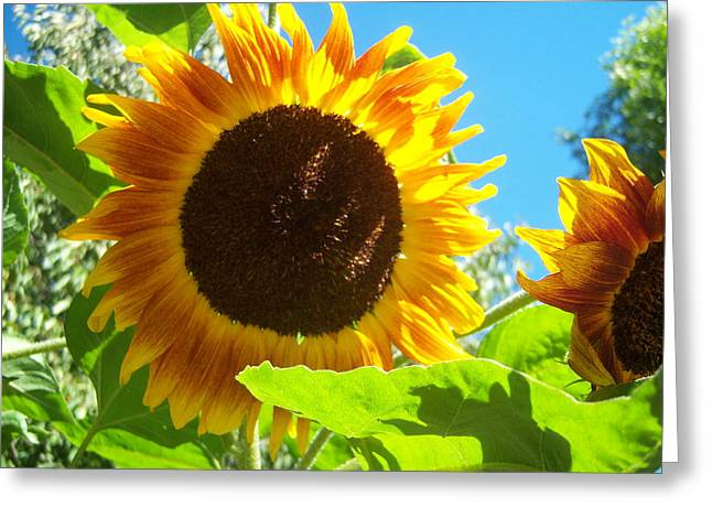 Sunflower 117 Greeting Card by Ken Day