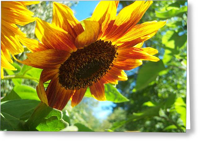 Sunflower  119 Greeting Card by Ken Day