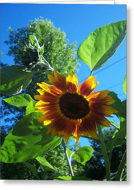 Sunflower 120 Greeting Card by Ken Day