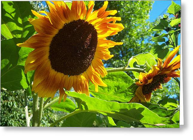 Sunflower 122 Greeting Card by Ken Day