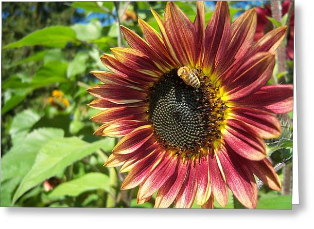 Sunflower 129 Greeting Card by Ken Day