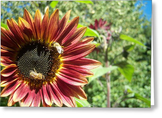 Sunflower 135 Greeting Card by Ken Day
