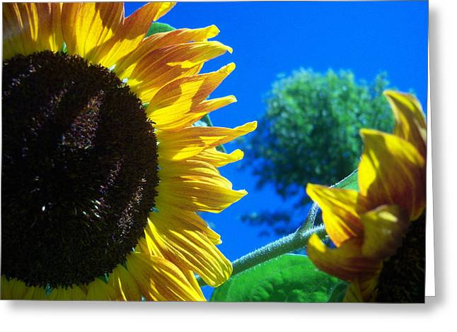 Sunflower 138 Greeting Card by Ken Day