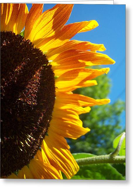 Sunflower 139 Greeting Card by Ken Day
