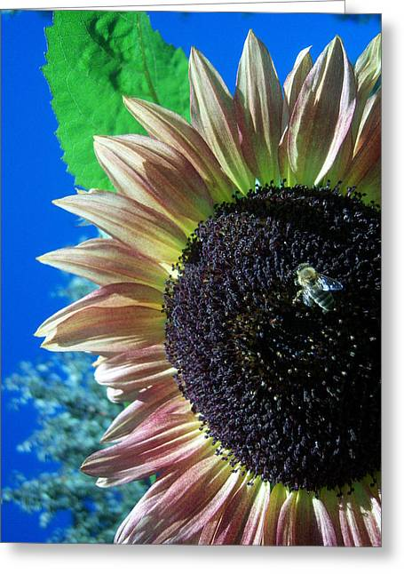 Sunflower 142 Greeting Card by Ken Day