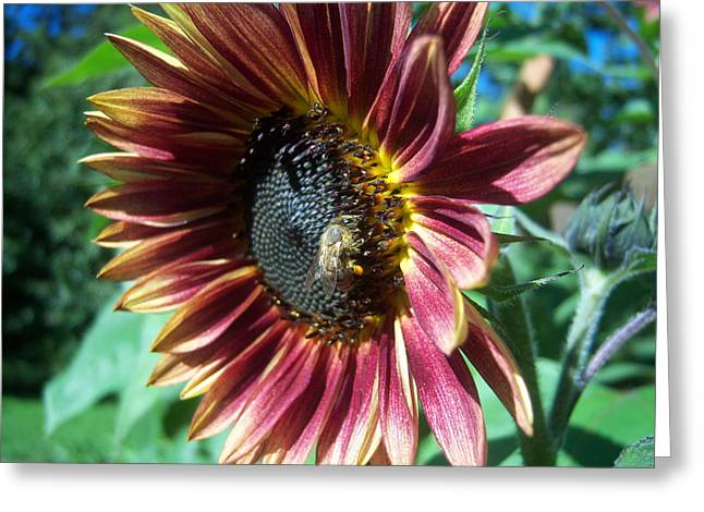 Sunflower 147 Greeting Card by Ken Day