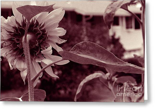 Greeting Card featuring the photograph Sunflower 2 by Mukta Gupta