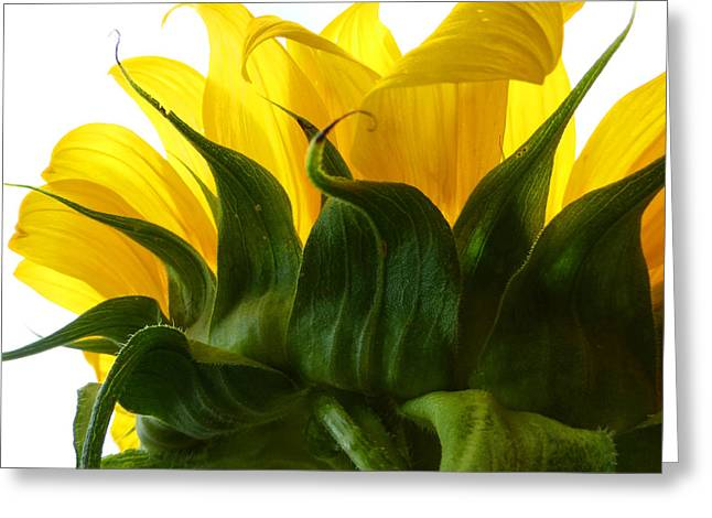 Sunflower 2015 2 Greeting Card