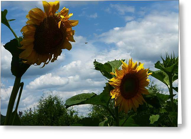 Sunflower 2015 7 Greeting Card