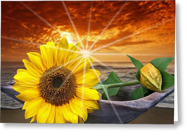 Sunflower 3 Greeting Card by Manfred Lutzius