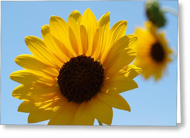Sunflower 4 Greeting Card by James Granberry