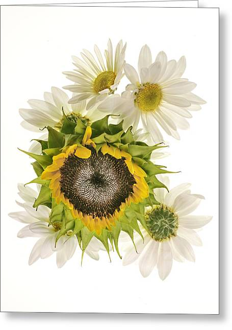 Sunflower And Daisies Greeting Card