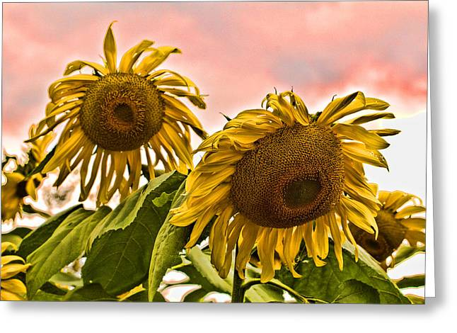 Sunflower Art 1 Greeting Card by Edward Sobuta