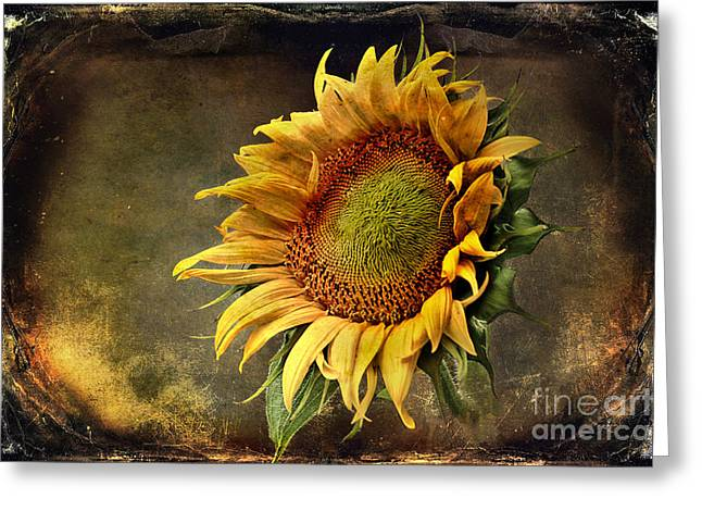 Sunflower Art Greeting Cards - Sunflower Art 2 Greeting Card by Sari Sauls