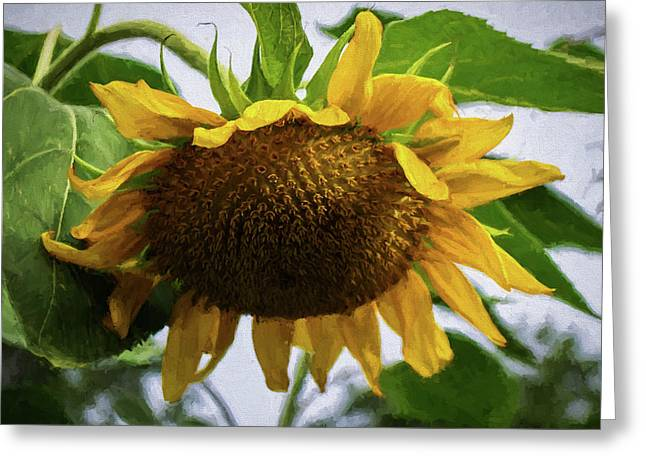 Sunflower Art II Greeting Card