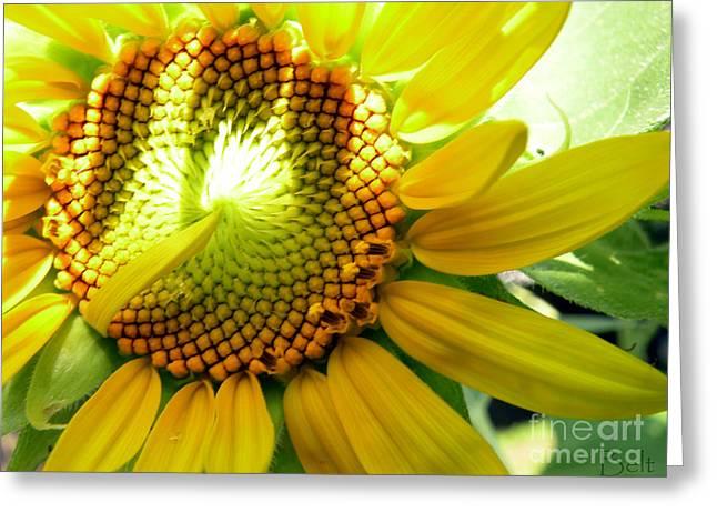 Sunflower At Snickerhaus Garden Greeting Card by Christine Belt