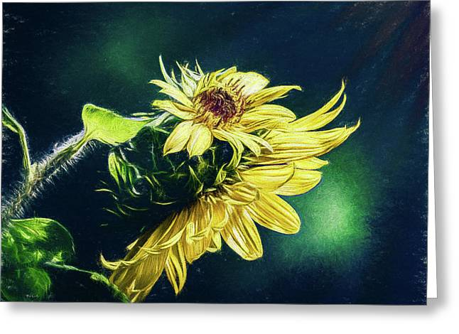 Sunflower At Sunrise Greeting Card by Bob Orsillo