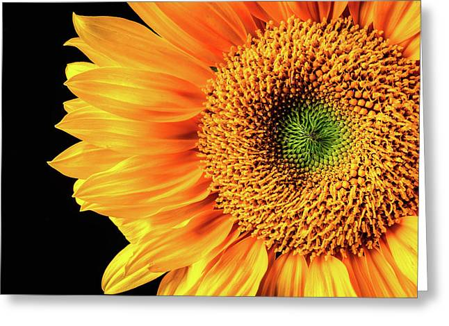 Sunflower Beauty Close Up Greeting Card