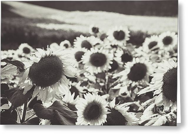 Greeting Card featuring the photograph Sunflower Black And White 1 by Andrea Anderegg