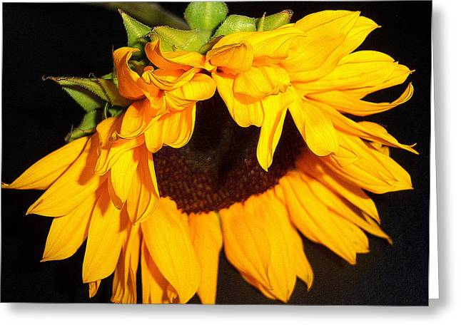 Sunflower Bliss Greeting Card by Dottie Dees