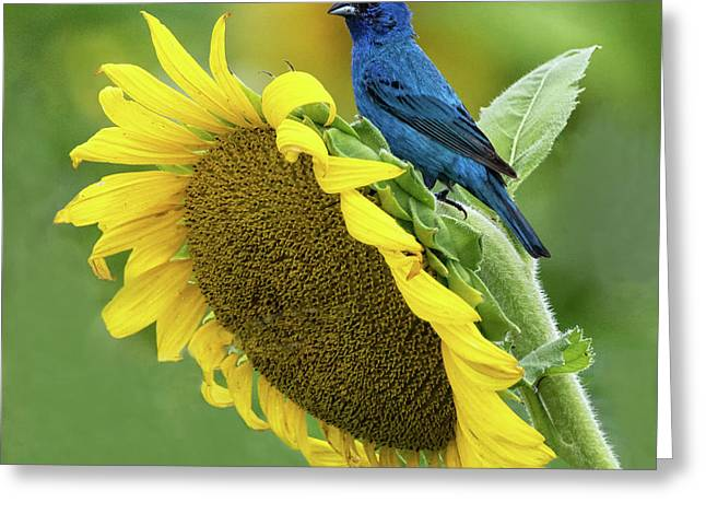 Sunflower Blue Greeting Card
