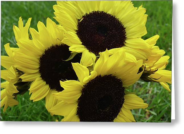 Sunflower Bouquet Greeting Card by Aimee L Maher Photography and Art Visit ALMGallerydotcom