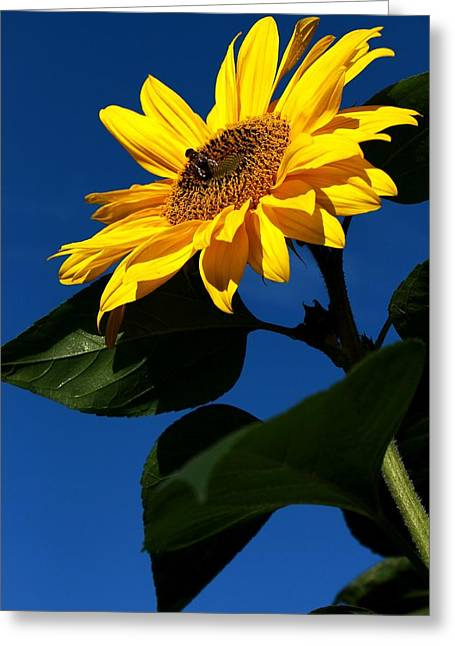 Sunflower Breakfast 1. Just Arrived  Greeting Card by Rusalka Koroleva
