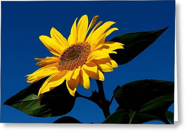 Sunflower Breakfast 3 Greeting Card