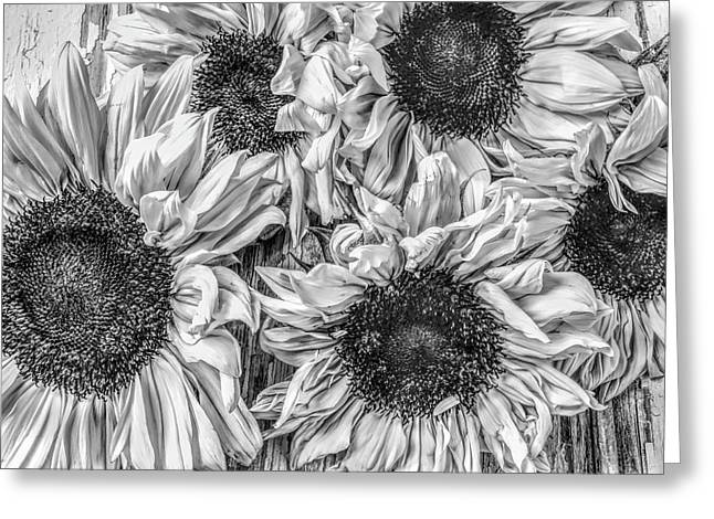 Sunflower Line Drawing : Black and white sunflower greeting cards pixels