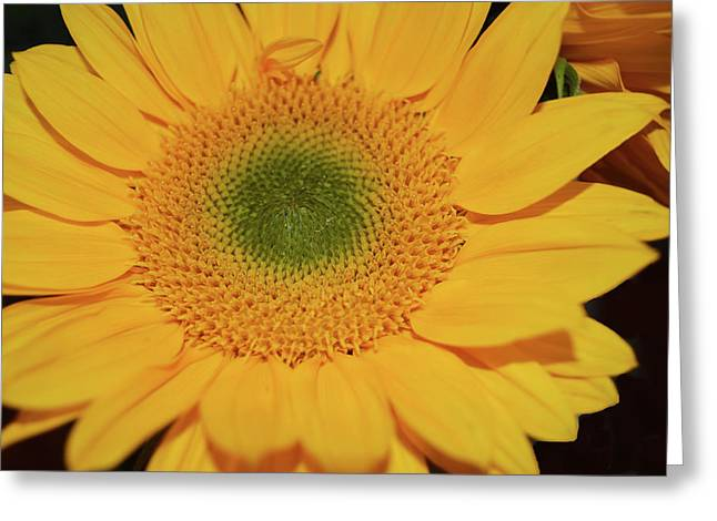 Sunflower Burst Greeting Card
