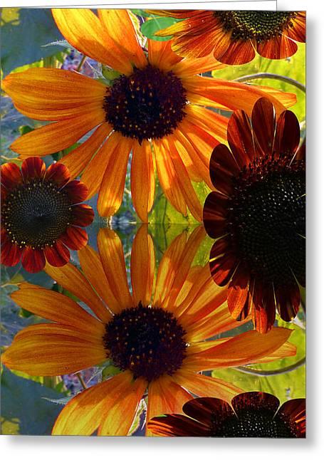 Sunflower Bursts Greeting Card