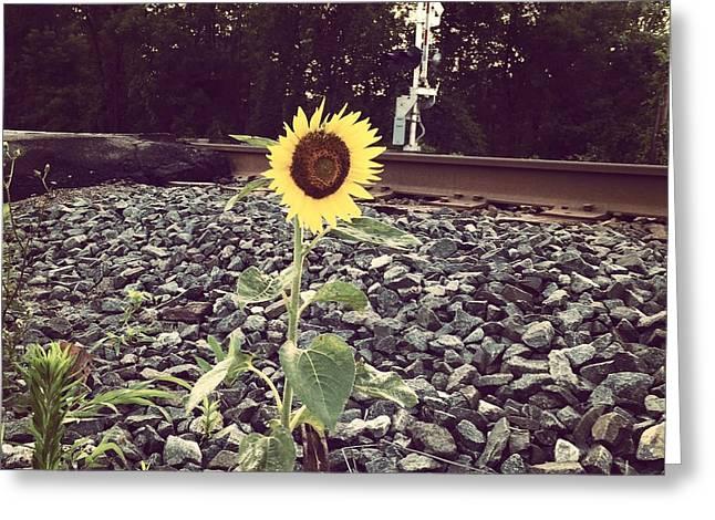 Sunflower Greeting Card by Carl Griffasi