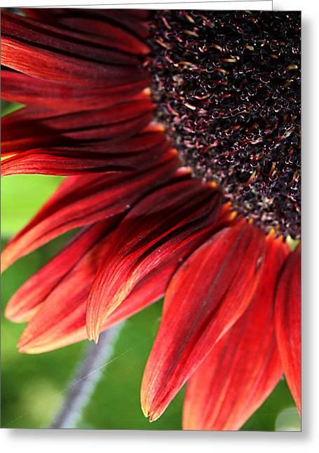 Sunflower Greeting Card by Carol Hicks