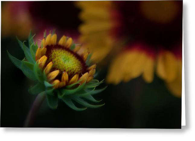 Greeting Card featuring the photograph Sunflower by Cherie Duran