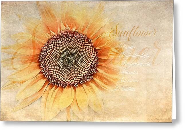 Sunflower Classification Greeting Card by Terry Davis