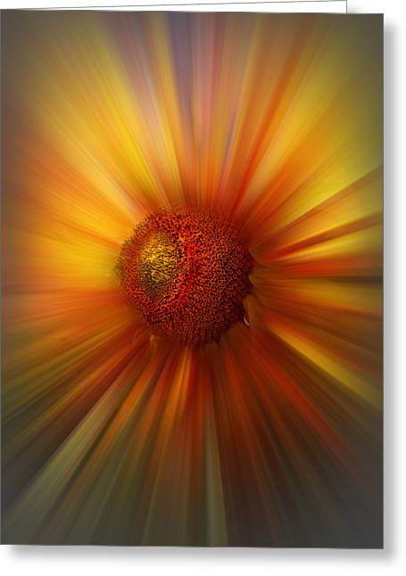 Swiss Photographs Greeting Cards - Sunflower Dawn Zoom Greeting Card by Debra and Dave Vanderlaan
