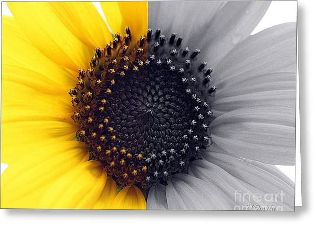 Sunflower Equinox Greeting Card