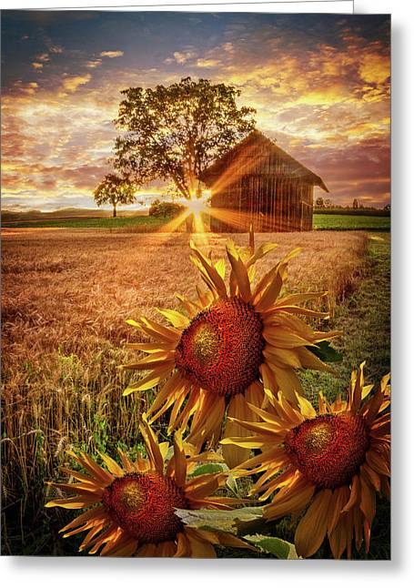 Sunflower Evening Greeting Card by Debra and Dave Vanderlaan