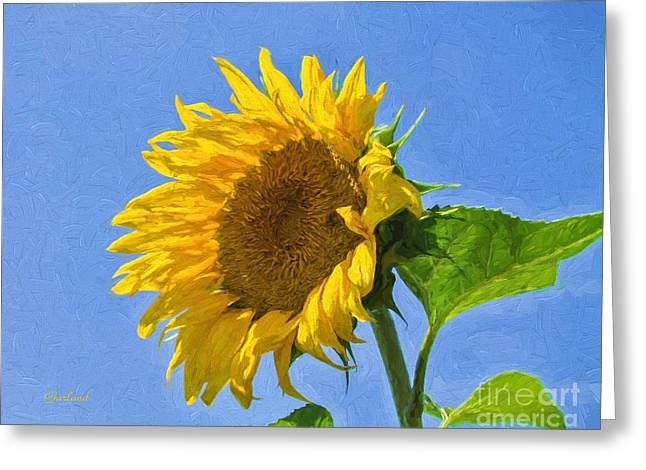 Sunflower Facing The Sun Greeting Card