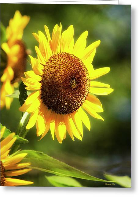 Greeting Card featuring the photograph Sunflower Field by Christina Rollo