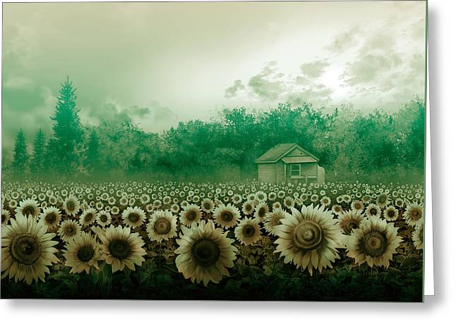 Sunflower Field Green Greeting Card