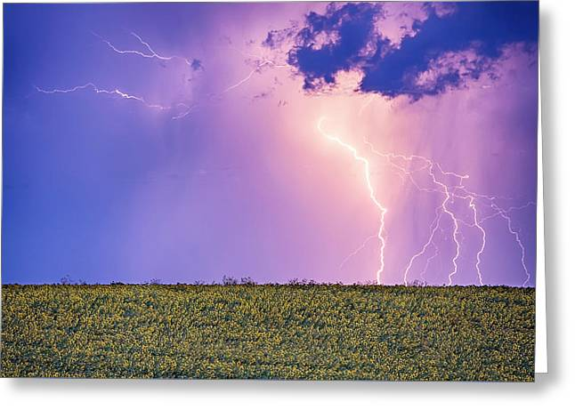 Sunflower Field Thunderstorm Greeting Card by James BO Insogna