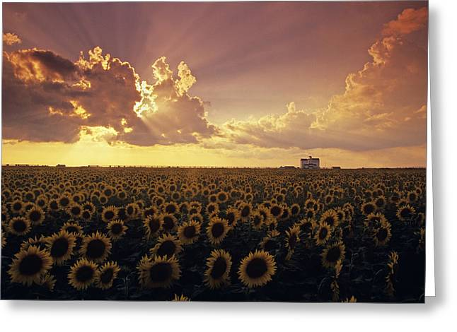 Long Shot Greeting Cards - Sunflower Field With Grain Elevator Greeting Card by Dave Reede