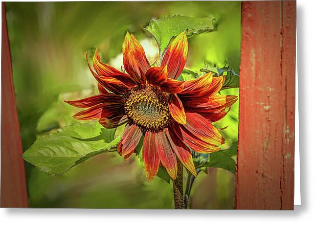 Sunflower #g5 Greeting Card