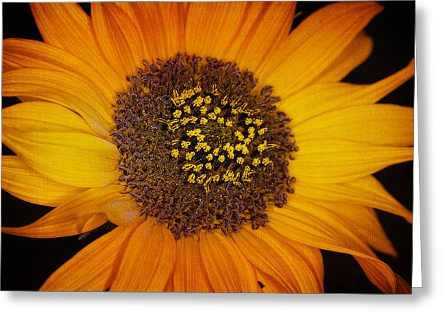 Sunflower Glory Greeting Card