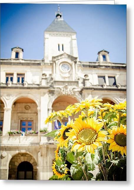 Greeting Card featuring the photograph Sunflower by Jason Smith