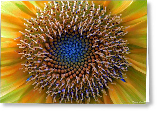 Sunflower Jewels Greeting Card