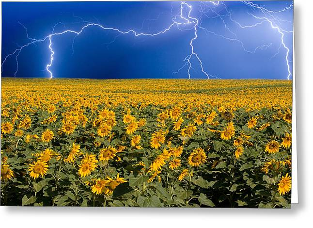 Sunflower Lightning Field  Greeting Card by James BO  Insogna